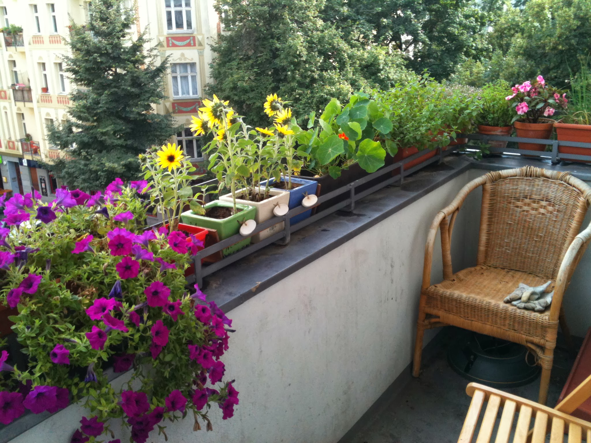 balcony with flowers and herbs