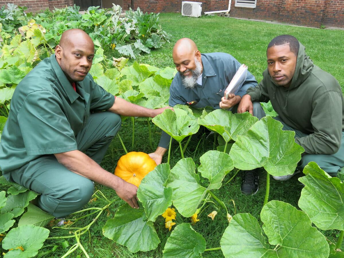 Prisoners in a prison garden project, Modern Farmer